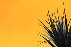 Artificial Indoor Plant Royalty Free Stock Photography