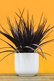Artificial Indoor Plant Stock Image