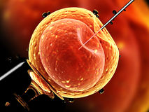 Artificial insemination. Needle puncture the cell membrane Royalty Free Stock Photography