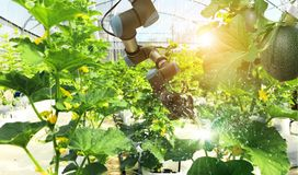 Artificial intelligence. Robot pollinating fruits and vegetables royalty free stock photo