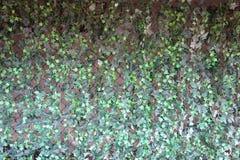 Artificial Ivy Stock Photos