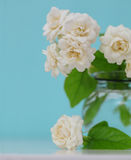 The artificial jasmine flower in the pot at the wood table with royalty free stock photography