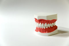 Artificial Jaw. An artificial jaw with a set of teeth dedicated to students of dentistry Stock Image