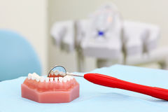 Artificial jaw and dental mirror are on table Royalty Free Stock Images