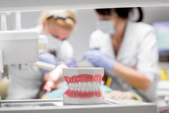 Artificial jaw in the dental office Royalty Free Stock Photography