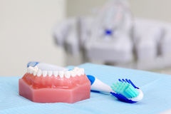 Artificial jaw and toothbrush are on table Stock Photography