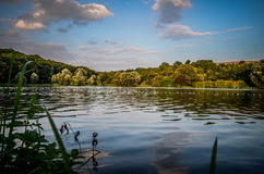 Artificial lake near goettingen. The artificial lake near goettingen, lower saxony, germany. The lake is called Wendebachstausee in germany Stock Images