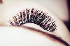 Artificial lashes. eyelash extension stock photography
