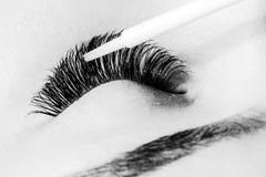 Artificial lashes. eyelash extension procedure royalty free stock image