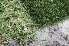 Artificial lawn Stock Photo