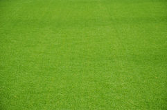 Artificial lawn Stock Images