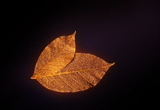 Artificial leaves. On dark background stock image