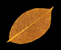 Artificial leaves. On black background royalty free stock photos