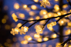 Artificial Lights on Tree Stock Image