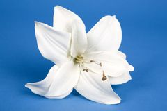 Artificial lilly Stock Images