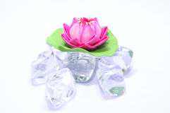 Artificial lotus on fake ice 01 Royalty Free Stock Photography