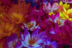Artificial lotus flowers Royalty Free Stock Image
