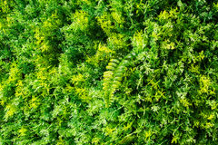 Artificial lush fern and lichen Royalty Free Stock Photography