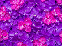 Artificial magenta orchid flowers Royalty Free Stock Image