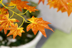 Artificial maple leaf Royalty Free Stock Images