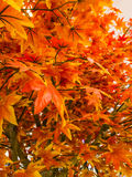 Artificial Maple leaves Stock Photo