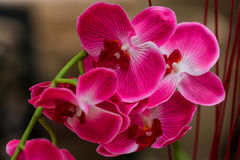 Artificial orchid Stock Images