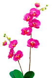 Artificial Orchid flower on white background. Stock Image