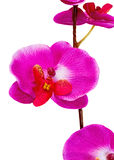 Artificial Orchid flower on white background. Royalty Free Stock Photography