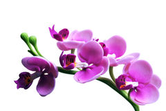 Artificial orchid. Artificial  orchid  handicraft from Thailand Stock Photo