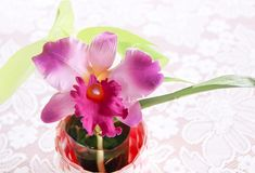 Artificial orchid in the vase Royalty Free Stock Images