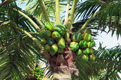 Artificial palm tree Royalty Free Stock Photos
