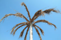 Artificial palm tree Royalty Free Stock Photo