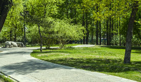 Artificial path in the woods Royalty Free Stock Photos