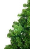 Artificial pine tree branch Stock Photo