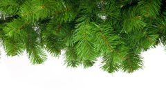Artificial pine tree branch Royalty Free Stock Photo