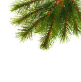 Artificial pine tree branch Stock Images