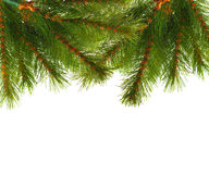 Artificial pine tree branch Stock Image