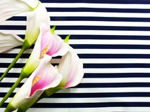 Artificial pink calla flowers bouquet located on Blue and white stripes canvas Royalty Free Stock Photography