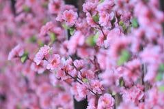 Artificial Pink cherry blossoms (Sakura Flower). Stock Photo