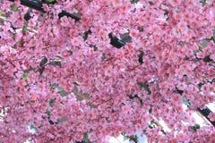 Artificial Pink cherry blossoms (Sakura Flower). Royalty Free Stock Photos