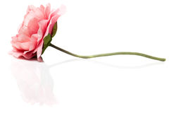 Artificial pink flower on white background Stock Images