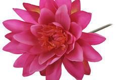 Artificial pink lotus flower Royalty Free Stock Photos