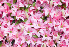 Free Artificial Pink Rain Lily Flowers Background Royalty Free Stock Images - 38626589