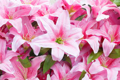 Artificial pink rain lily flowers background Royalty Free Stock Photography