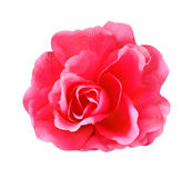 Artificial pink rose isolated on white background Royalty Free Stock Photo