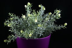 Artificial plant. Artificial plant isolated on a black background Stock Photo