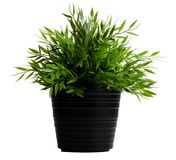 Artificial plant in a black pot Stock Photos