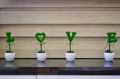 Artificial Plant for Housing Decoration. They are artificial plant for decoration royalty free stock photography