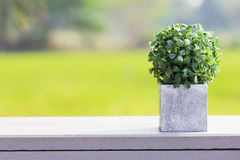 Artificial plant Stock Photography