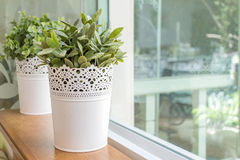 Artificial plant pot. Home decoration Stock Images